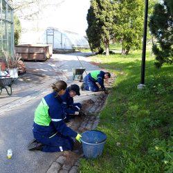 Klubitalon työvalmentaja ja kaksi työntekijää tuetussa puutarhatyössä kitkemässä rikkaruohoja.